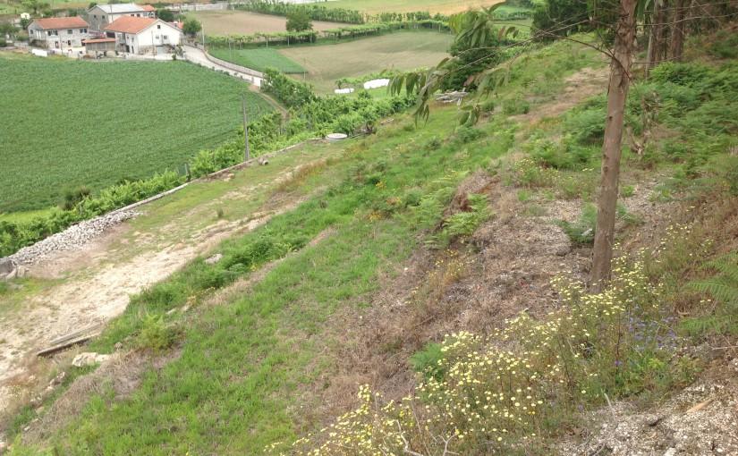 Terrain à vendre de 2000m² à MORREIRA, BRAGA